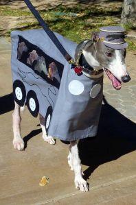 002 greyhound