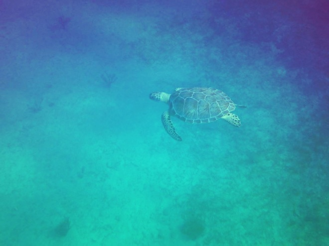 Breaking news! Sea turtle spotted in Florida!